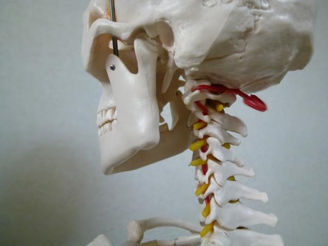 問いかければ、体は必ず何らかの方法でフィードバックを返してくれる