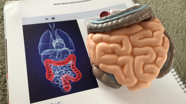 重陽の日のボデイートーク勉強会:「わたしは誰?」「キクを秘める聴覚ワーク」「コントロールと大腸の練習セッション」
