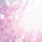 3月20日(日) 春分、仕事の変容を望む方へ。その問題は外にある?それとも自分の内側?