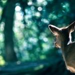 6/19(日)ワークショップ、6/21(火)夏至の瞑想会&森の宴