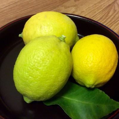 カーム治療室の勝田さんからいただいたレモンちゃんたち