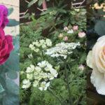 見つけたのは内側の花畑、この春には庭にも花々が